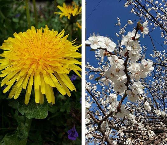 Samsung Galaxy A7 примеры фото